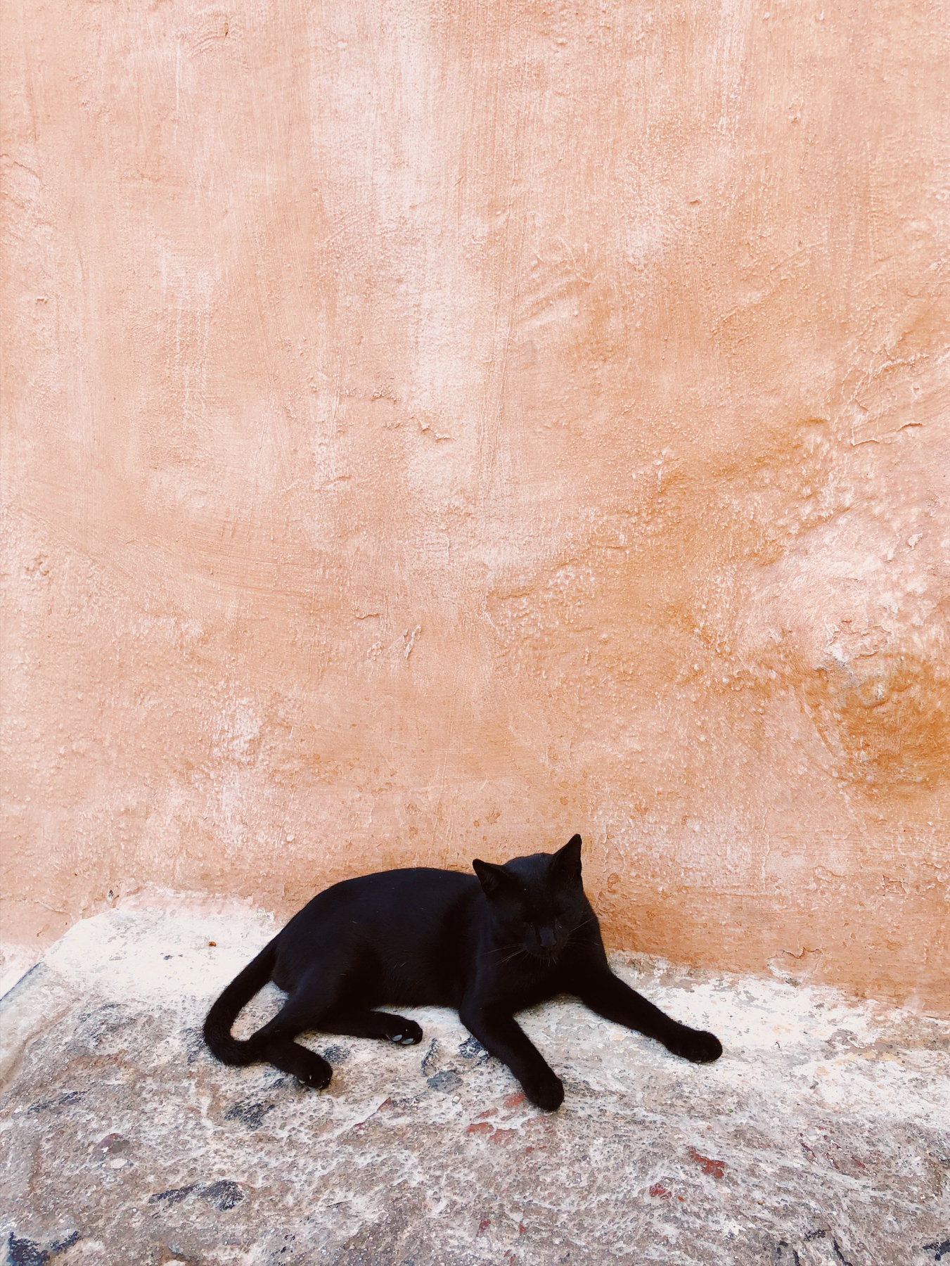 Kitty in Oia