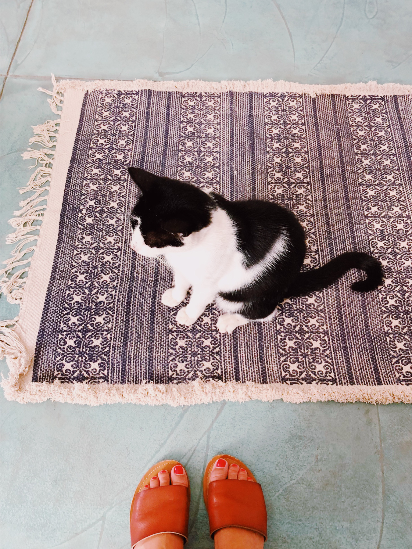 Furry friend at our guest house