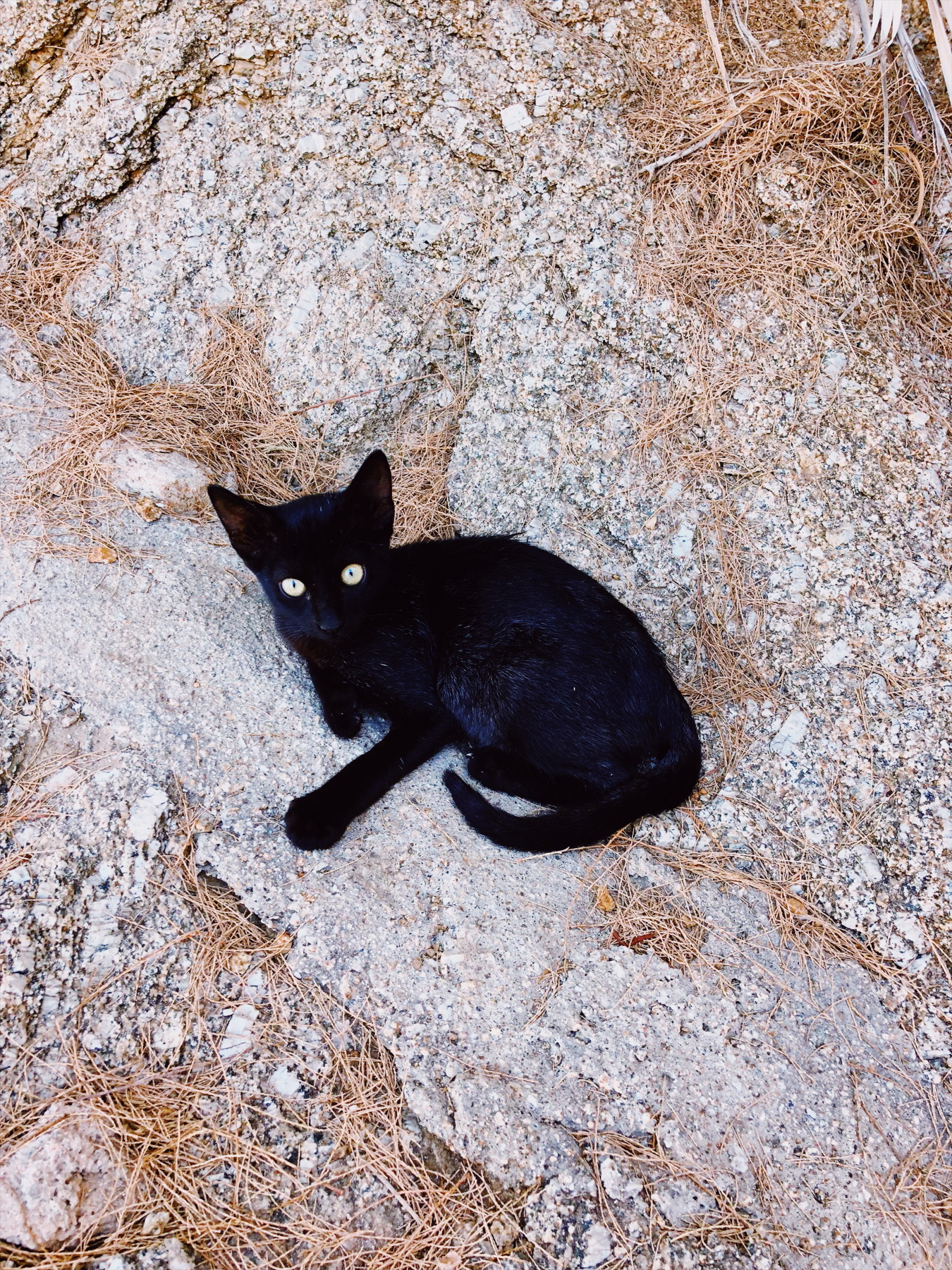 A Mykonos kitty