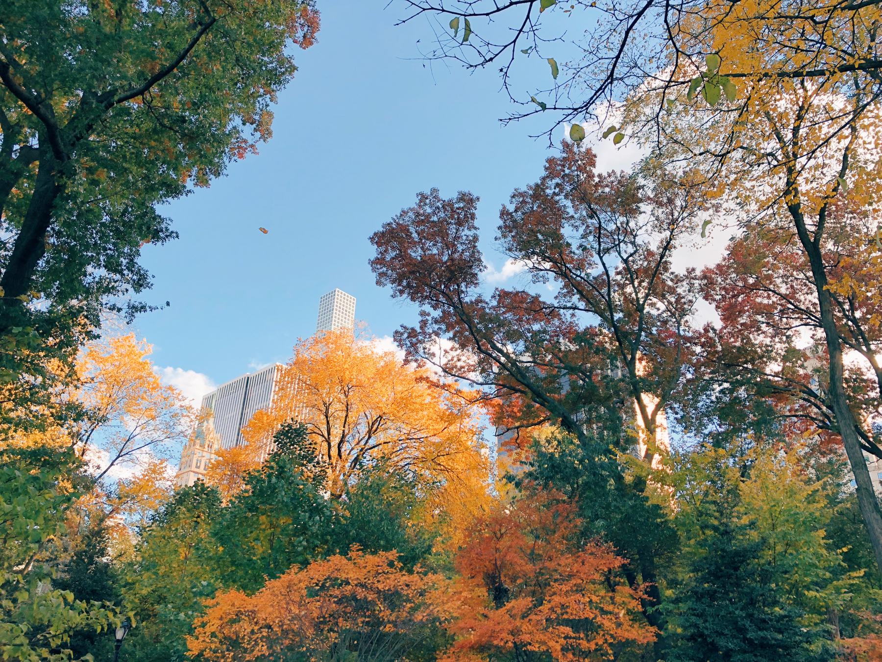Central Park, Hallett Nature Sanctuary