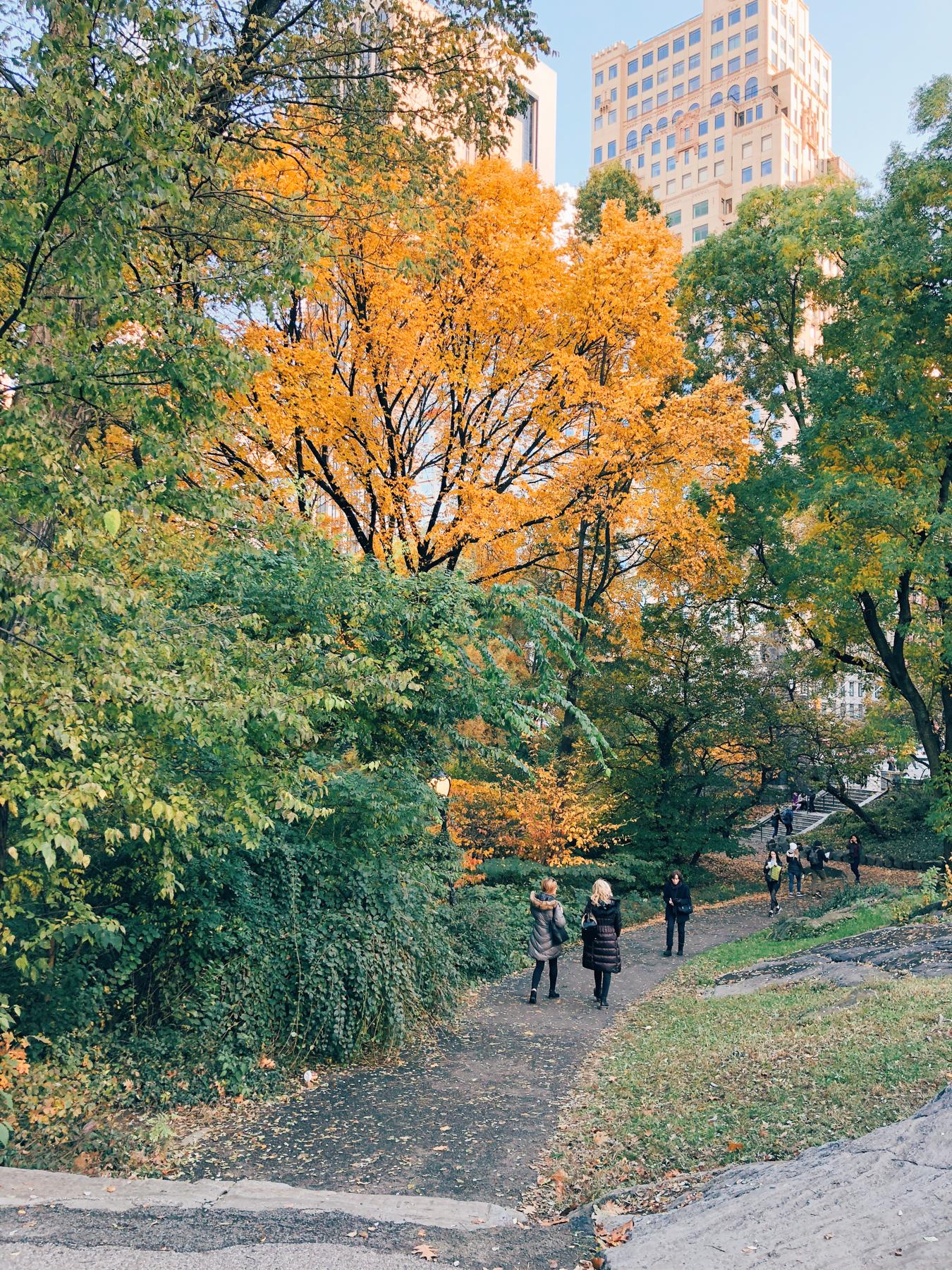 Central Park, near The Pond