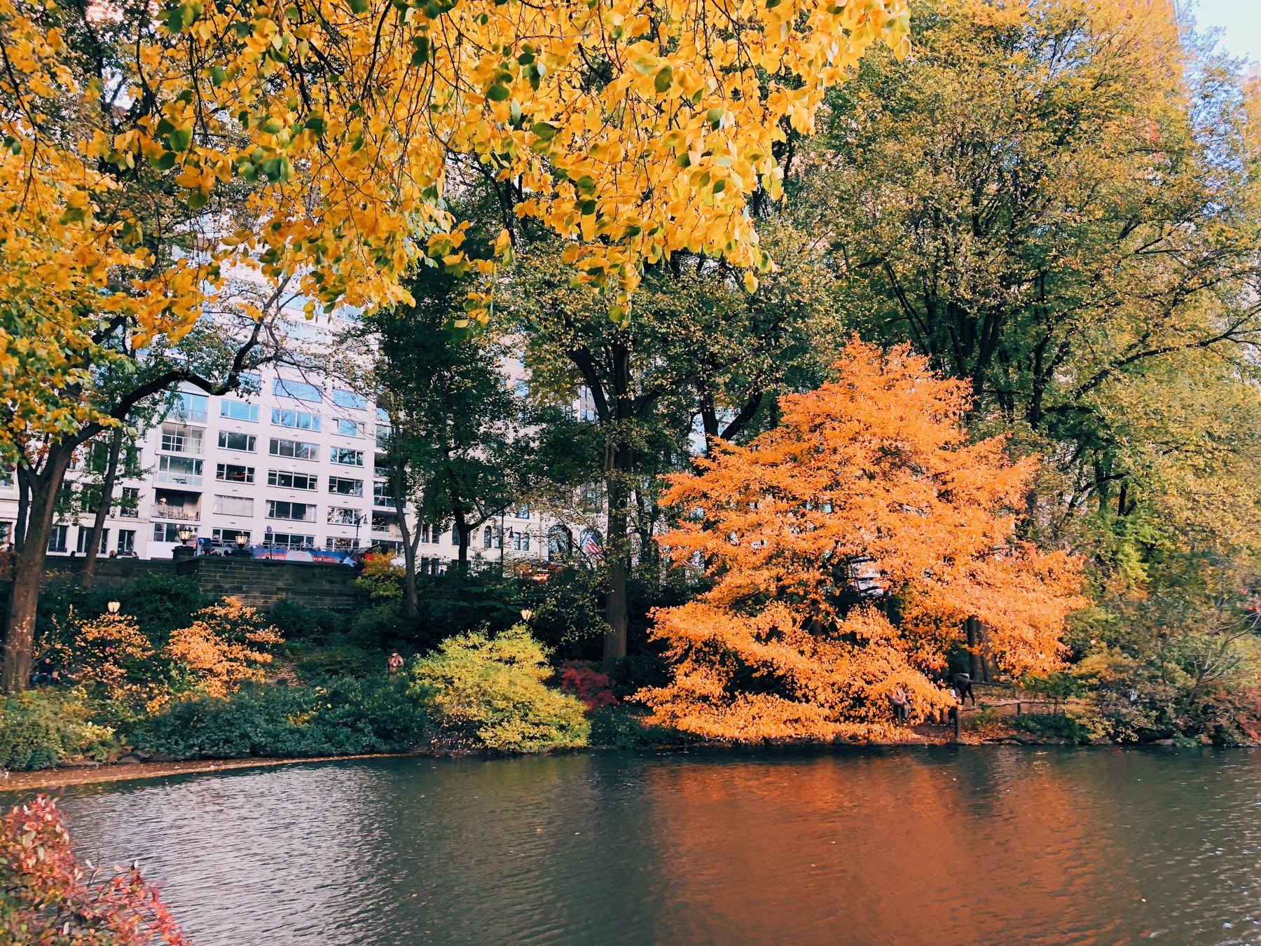 Central Park, The Pond