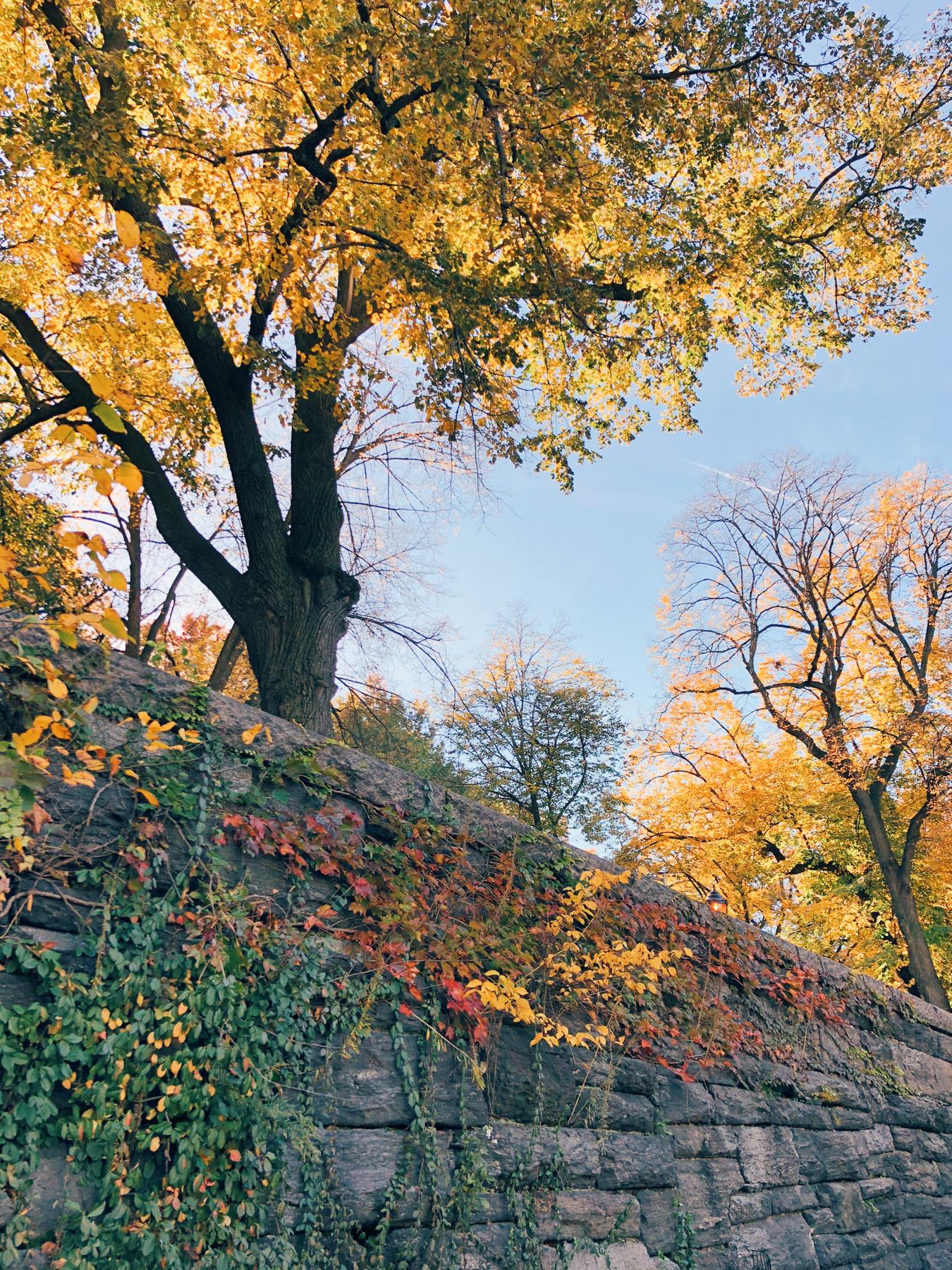 Riverside Park, near W 100th St.