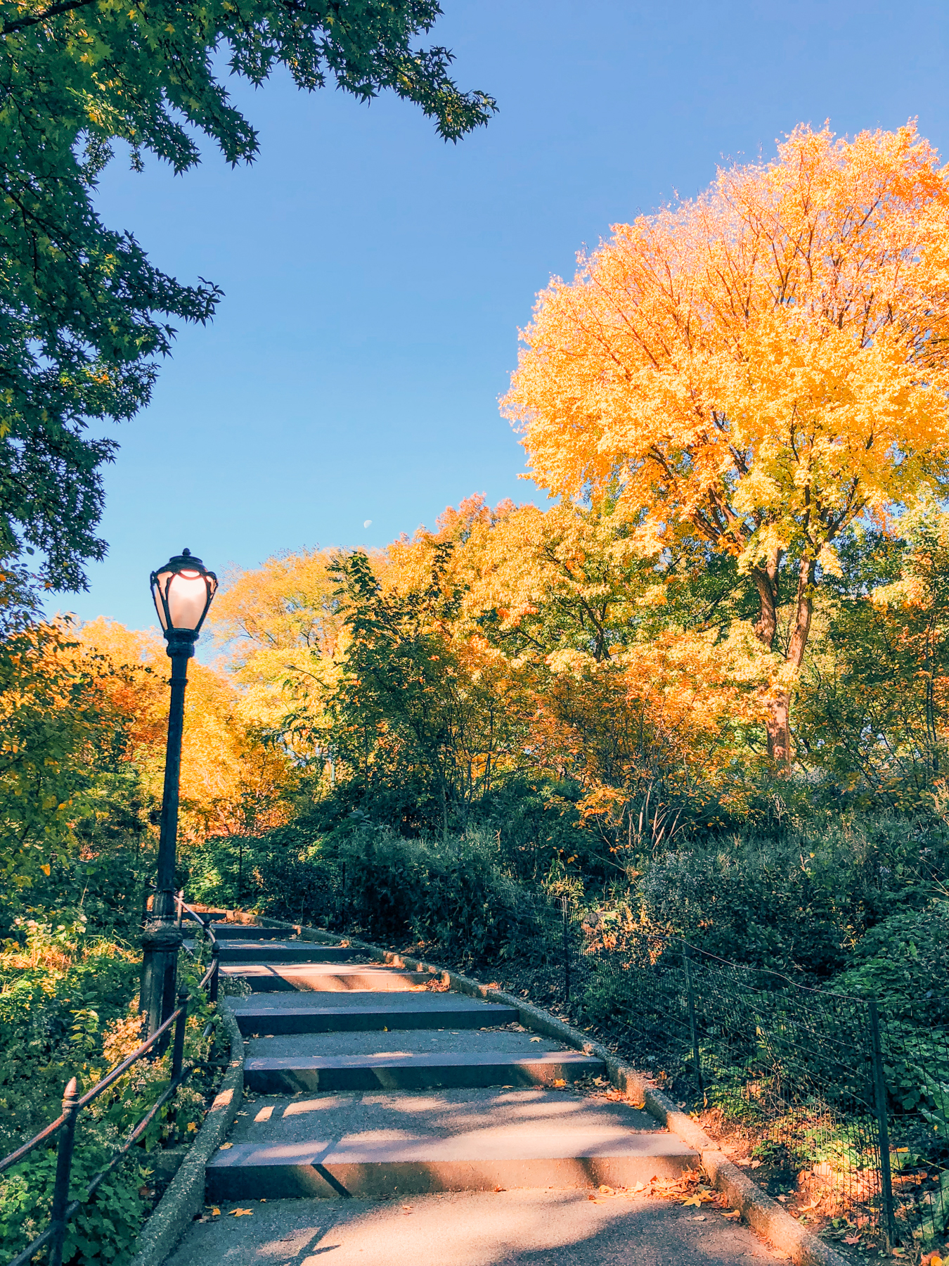 Central Park near Balto Statue