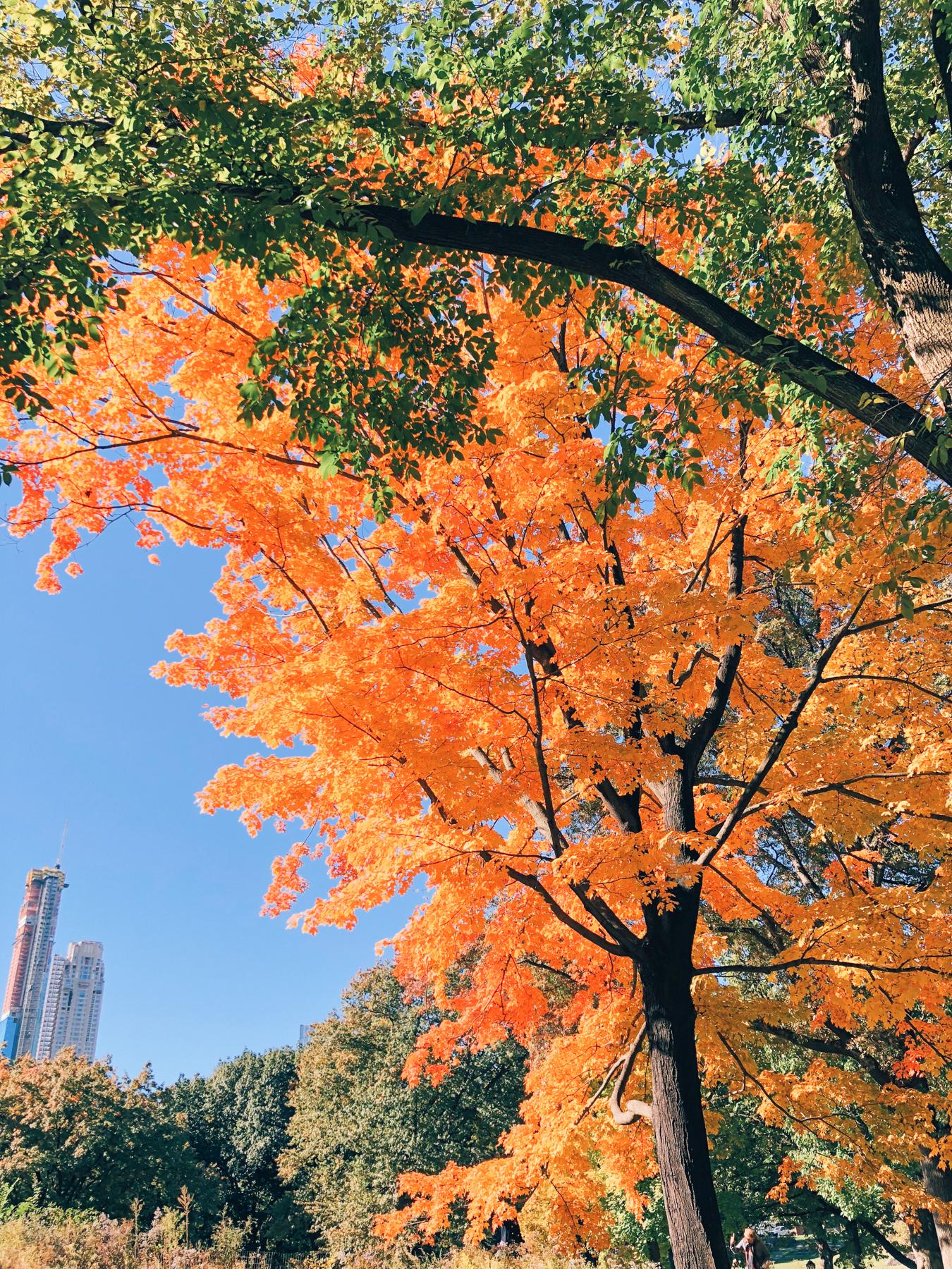 Central Park, near The Mall