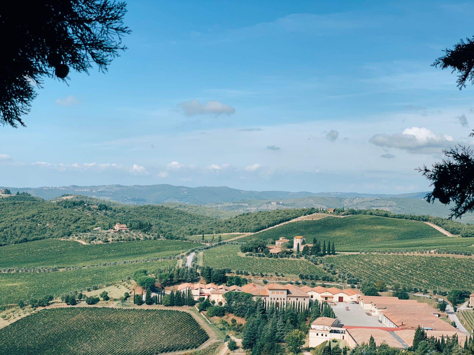 View of the vineyards from Castello di Brolio.